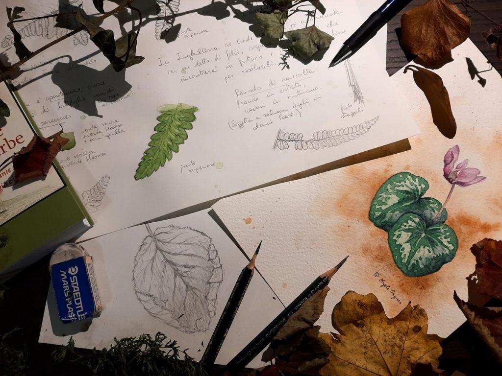 Studi e disegni a matita di foglie, rami e piante per corso di disegno