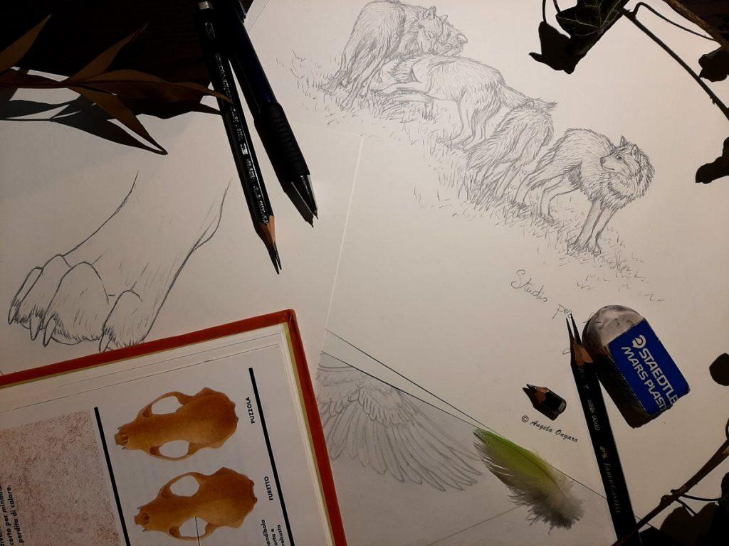 Studi e disegni a matita di lupi, ali e zampe di animali per corso di disegno