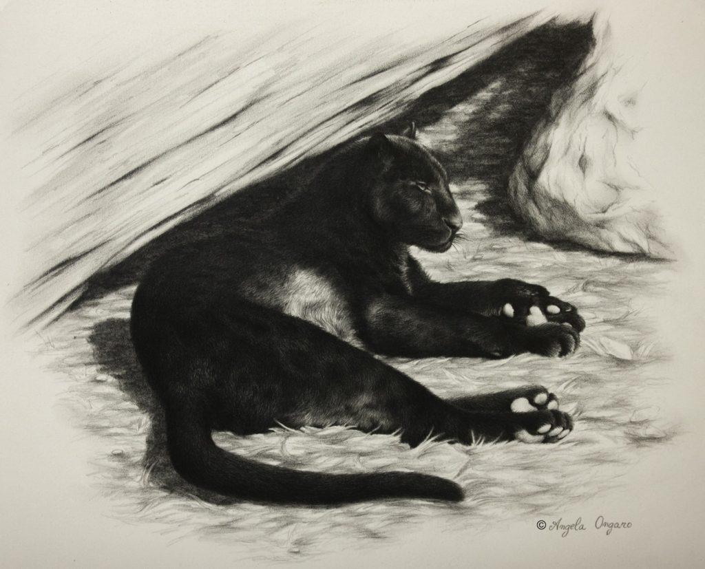 Sotto un caldo sole disegno di leopardo nero dell'artista Angela Ongaro