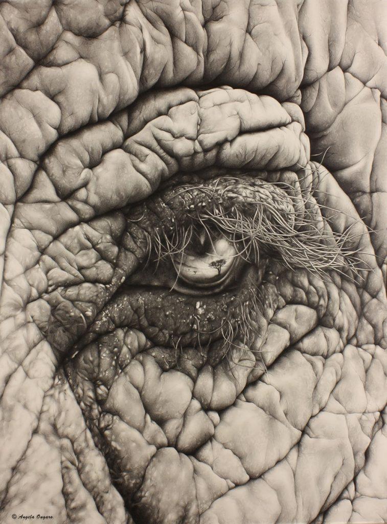 Lo specchio dell'anima disegno a matita di un occhio di elefante con il riflesso della savana all'interno realizzato dall'artista Angela Ongaro