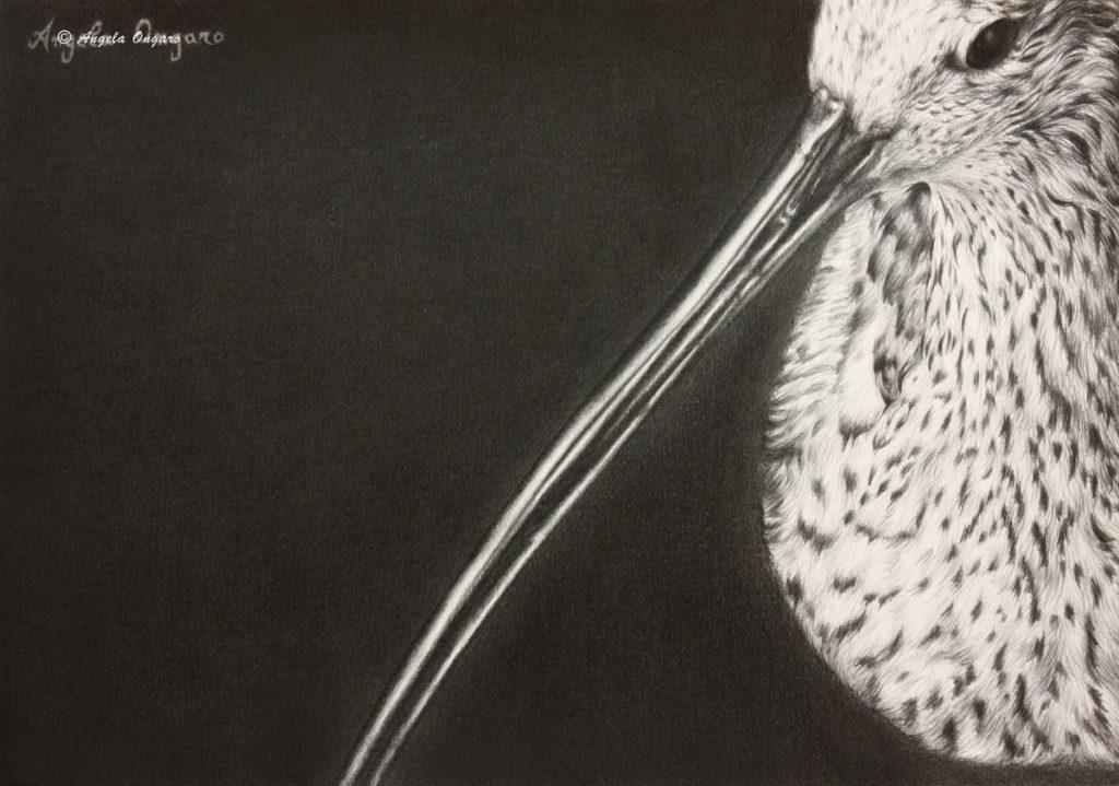 Aiace disegno a matita di chiurlo maggiore realizzato dall'artista Angela Ongaro