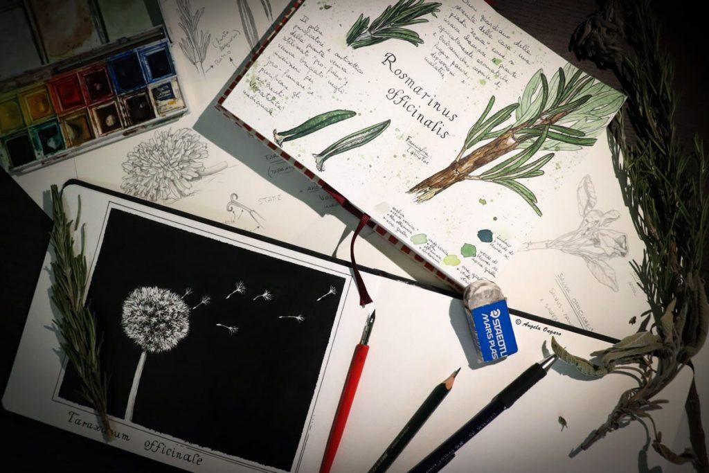 Studi e disegni a matita inchiostro e acquerello di rami e piante officinali per corso di disegno