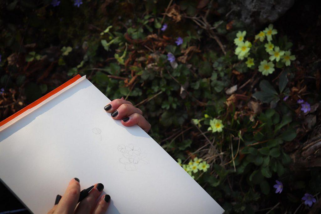 Studio disegno a matita di piante e fiori spontanei