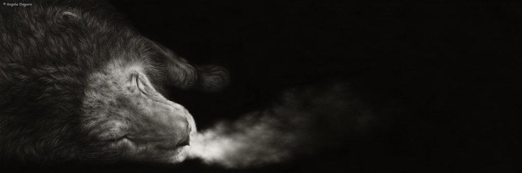 La cadenza del suo ultimo respiro disegno a matita di leone morente realizzato dall'artista Angela Ongaro